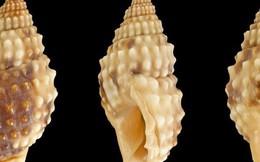 Thấy gì từ vụ cô giáo trẻ ở Bình Định tử vong sau khi ăn hai con ốc biển?