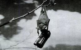 """Thí nghiệm đáng hổ thẹn của Mỹ: """"Bom dơi"""" phản chủ, tự quay đầu đốt phá căn cứ, nổ tung xe"""