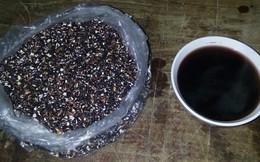 Chuyên gia Đông Y tiết lộ loại hạt quý như việt quất, tác dụng chữa nhiều bệnh nhiều ở VN