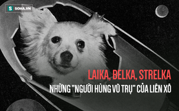 """Sứ mệnh có 1-0-2 của 3 chú chó """"phi hành gia"""" Liên Xô: Laika chết khi tròn 3 tuổi"""