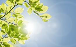 Có lẽ bạn sẽ phải phát ghen khi biết cây cối có hẳn loại gene để chống nóng