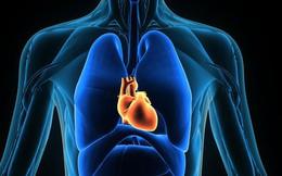 Ung thư có hàng trăm loại nhưng hiếm khi ta nghe nói tới ung thư tim - vì sao?
