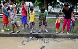24h qua ảnh: Cá bị nước cuốn lên đường phố sau bão lớn ở Philippines