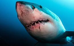 10 sự thật thú vị đến kinh hoàng về thế giới động vật, cái cuối cùng nam giới nào cũng làm theo mà không biết