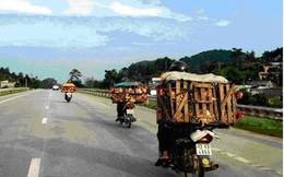 Mang sọt tre 'gánh' gà con ủ rũ, chết từ Trung Quốc vào VN
