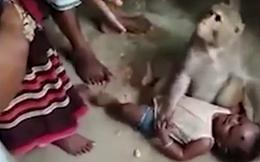 Clip: Cảnh tượng khỉ ngang nhiên vào làng bắt cóc trẻ con