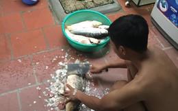 Đầu tư bể sục để có cá sạch ăn lâu dài, ai ngờ chồng lẩn thẩn khiến mâm cơm rặt cá chỉ sau một đêm