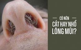 Thói quen cắt, nhổ lông mũi có hại hay vô hại: BS Mỹ giải thích cực chuẩn, ai cũng phục