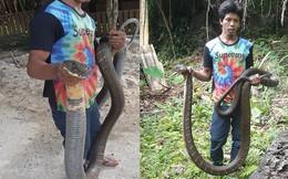 24h qua ảnh: Người dân bắt được rắn hổ mang khổng lồ ở Thái Lan