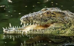 Chuyện đời chàng cá sấu móm: Thất bại trong trận huyết chiến với đồng loại, may mắn sống sót với cái mồm chẳng giống ai