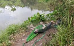 Cần thủ vứt cần câu bỏ chạy khi thấy thi thể nam giới nổi ở rạch