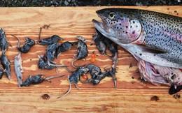 Tung tăng dưới nước, nhưng những loài cá này còn là sát thủ cực nguy hiểm trên cạn