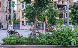 Có thể bạn chưa biết: Hà Nội vừa có một con đường hoa hồng đẹp thế này đây