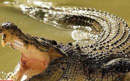 Cố bảo vệ chó cưng, người phụ nữ bị cá sấu cắn chết