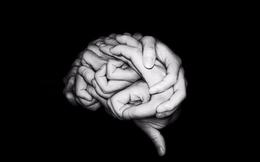 Hình bàn tay hay bộ não đập vào mắt bạn trước tiên, đáp án sẽ tiết lộ bạn thuộc tuýp người nào