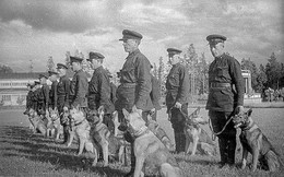 Chó cảm tử của Liên Xô - nỗi kinh hãi tột độ cho quân Đức Quốc xã trong Chiến tranh Vệ quốc