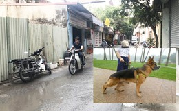 Chó Becgie cắn chết người ở Hà Nội: Bị tấn công bất ngờ, nạn nhân ngã đập đầu xuống đất