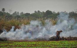 Lắp 4339 camera an ninh để ngăn chặn nông dân đốt rơm gây ô nhiễm môi trường