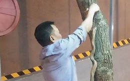 Rắn thi nhau xuất hiện tại khu đô thị Linh Đàm