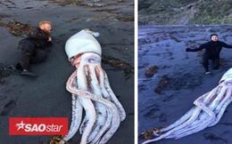 """Mực """"quái vật"""" dài 4,2m dạt bờ biển New Zealand"""