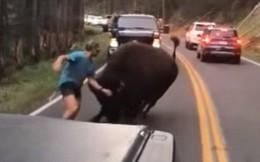 Mỹ: Thanh niên nghịch dại trêu bò rừng để rồi bị húc sấp mặt trong công viên quốc gia