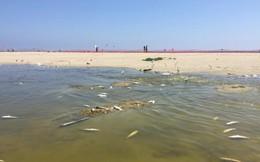"""Nắng nóng cực đoan gần như """"luộc chín"""" hơn 2.000 con cá ở California"""