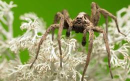Đây là màu sắc mà mọi người sợ nhện nên tránh mặc, nếu không muốn khóc thét vì sợ hãi