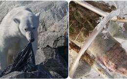 Trong vòng 1 tuần: Gấu trắng ăn nylon, rùa biển cực hiếm chết kẹt trong ghế sắt và những bức hình gây ám ảnh từ rác thải của con người