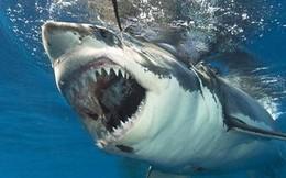 Bị cá mập kẹp chân, người đàn ông tung đòn đấm liên hoàn, thoát chết trong gang tấc