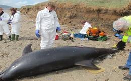 Xét nghiệm cá heo, khoa học bất ngờ tìm ra các hóa chất kinh khủng nhất từ trước đến nay