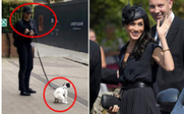Bức ảnh Meghan mặc đồ đen dắt chó cưng đi vệ sinh bên ngoài cung điện hoàng gia được lan truyền chóng mặt và gây tranh cãi vì điều này