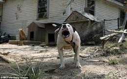Thấy cháu bị chó tấn công, bà ra giúp liền bị chính con chó mình nuôi vồ chết