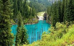 """Khám phá hồ nước kỳ ảo, có loài cây mọc theo kiểu """"thách thức quy luật tự nhiên"""""""