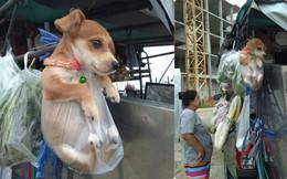 Gương mặt ngơ ngác và tình trạng của chú chó nhỏ khiến dân mạng bật cười