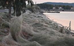 Bờ biển Hi Lạp bị mạng nhện khổng lồ bao phủ, dân mạng bấn loạn đòi đốt sạch trước khi lũ nhện sinh sôi nảy nở