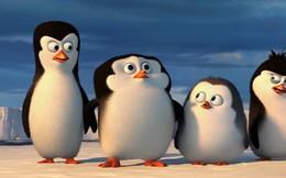 Cận cảnh cuộc cuộc sống siêu ngớ ngẩn của bè lũ chim cánh cụt trên mảnh đất Nam Cực lạnh giá