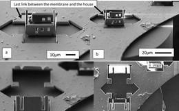 Ngôi nhà nhỏ nhất thế giới chỉ quan sát được bằng kính hiển vi