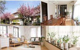 Ngôi nhà nhỏ lãng mạn của đôi vợ chồng trẻ từ bỏ cuộc sống ở Tokyo, Nhật Bản để về ngoại ô sinh sống