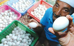 Khởi nghiệp từ 50 con vịt, cặp vợ chồng kiếm gần 70 triệu đồng mỗi tháng nhờ bán trứng vịt