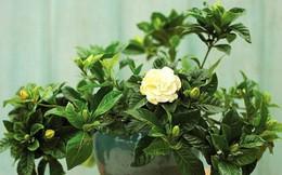 Mùa thu nên trồng những loại cây gì trong nhà để không khí luôn trong lành?