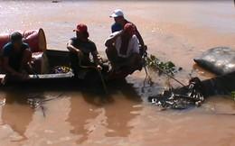 Cát tặc chống đối, nhấn chìm ghe khi bị bắt quả tang đang khai thác cát lậu trên sông Đồng Nai