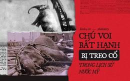 Câu chuyện chấn động thế giới: Chú voi trong rạp xiếc bị treo cổ vì giết người da trắng