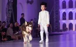 Nam vương thiếu nhi gây ấn tượng khi catwalk cùng thú cưng