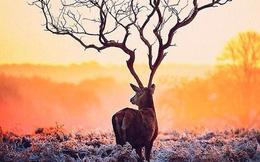 Bạn nhìn thấy con nai hay nhánh cây, đáp án sẽ tiết lộ khả năng tư duy của bạn ra sao