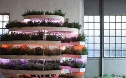 """Khu vườn mini bằng gỗ giúp công cuộc trồng rau sạch trong nhà của """"nông dân phố"""" dễ dàng hơn"""