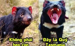 Những loài vật nhìn 'đáng yêu' nhưng có con đã làm chết người: Số 6 là Quỷ Tasmania!