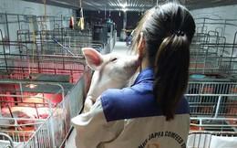 Câu chuyện nhỏ đáng yêu của nữ sinh sáng làm luận án, chiều nâng niu đàn lợn