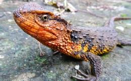Những loài mới được phát hiện ở tiểu vùng Mê Kông