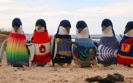 Ở Canada, trời lạnh đến mức sở thú nơi đây phải đưa chim cánh cụt vào trong nhà tránh rét