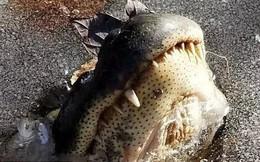 """Hồ nước đóng băng dưới cái lạnh khắc nghiệt, hàng loạt cá sấu """"ngủ đông"""", vươn mõm qua lớp băng để thở"""